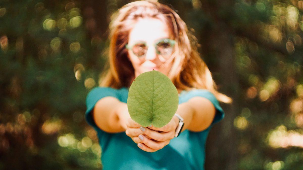 Quelles études pour travailler dans le développement durable ?